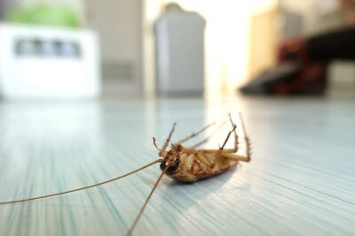Как избавиться от тараканов, клопов и прочих насекомых