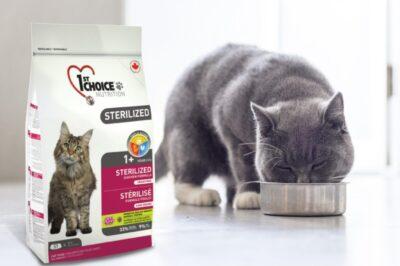 Выбираем качественный  сухой корм для кошек
