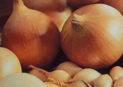 Как выбрать лук севок