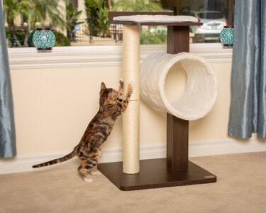 Как приучить кота к когтеточке в домашних условиях